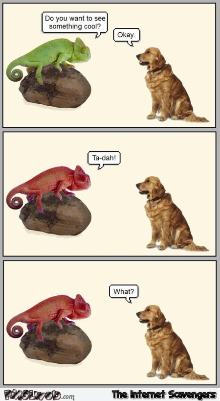 Chameleon and dog joke @PMSLweb.com
