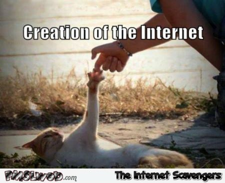 Creation of the internet cat meme @PMSLweb.com