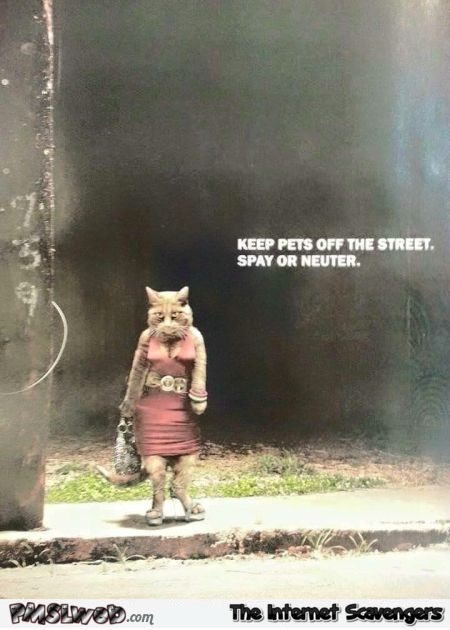 Keep pets off the street funny picture @PMSLweb.com