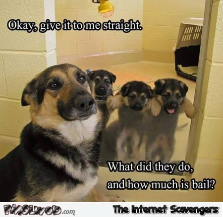 Bailing out puppies meme – Wednesday mischief @PMSLweb.com