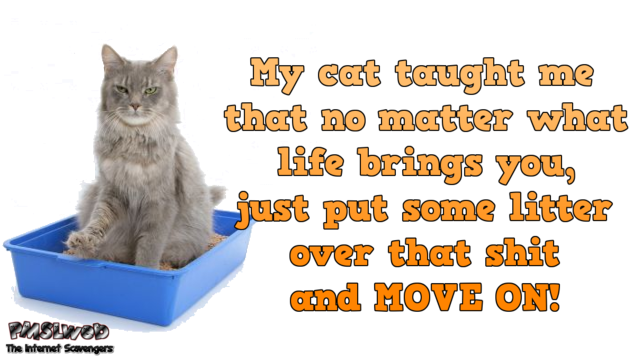 My cat taught me funny quote @PMSLweb.com