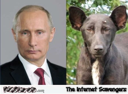 Putin and dog look alike