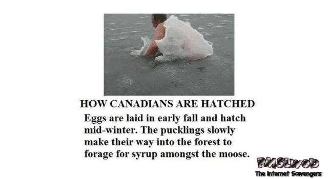 How Canadians are hatched – Funny Canada @PMSLweb.com