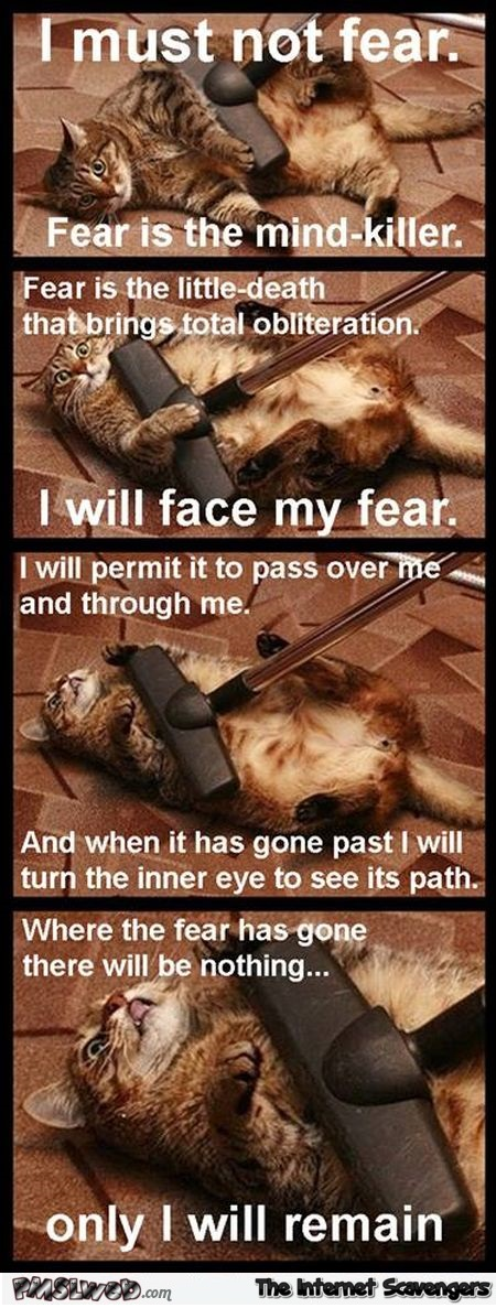 I must not fear cat meme – Sunday funnies @PMSLweb.com
