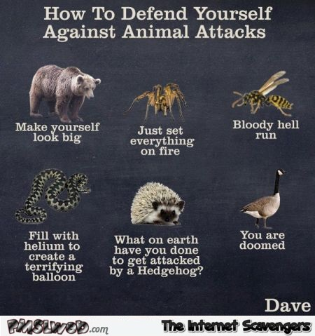 How to defend yourself against animal attacks – PMSLweb weekend @PMSLweb.com