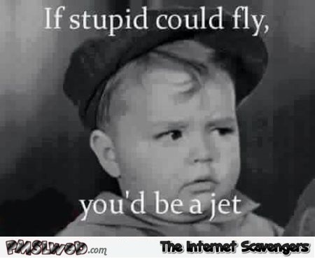 If stupid could fly funny quote @PMSLweb.com