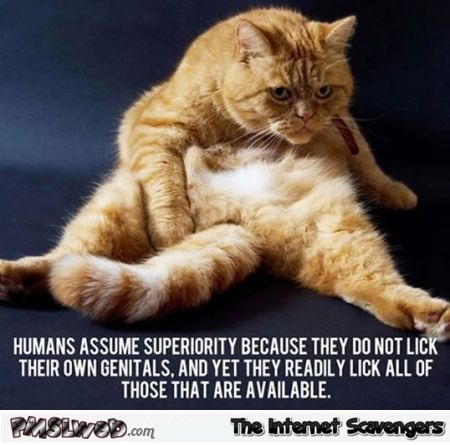 Funny cat thought about humans @PMSLweb.com