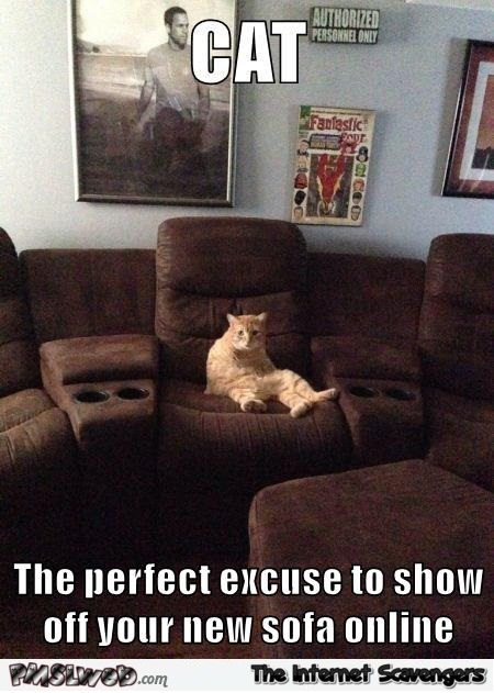 Cat The Perfect Excuse To Show Off Your New Sofa Meme Pmslweb