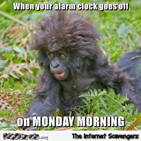 Monday morning alarm clock meme pmslweb