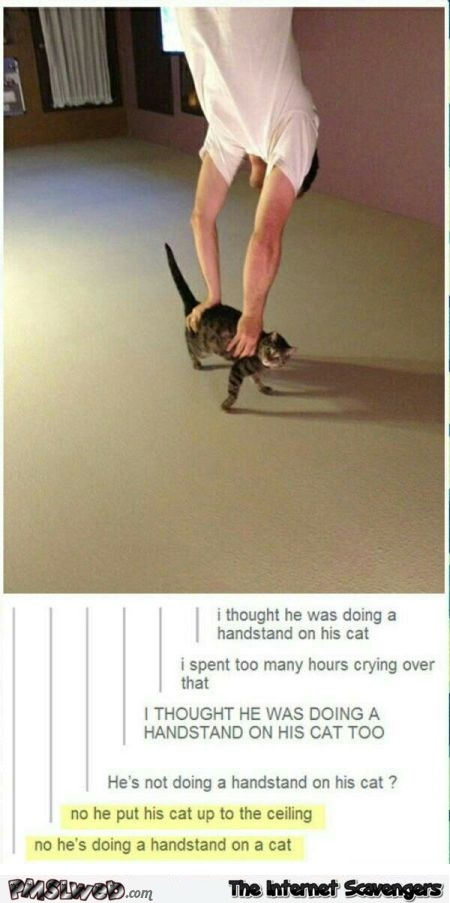 Handstand on a cat humor @PMSLweb.com