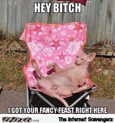 Your fancy feast is right here cat meme – Crazy cat world @PMSLweb.com