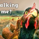 You talking to me? Chicken with an attitude @PMSLweb.com