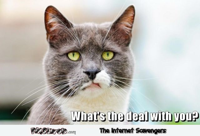 What's the deal with you cat meme @ PMSLweb.com