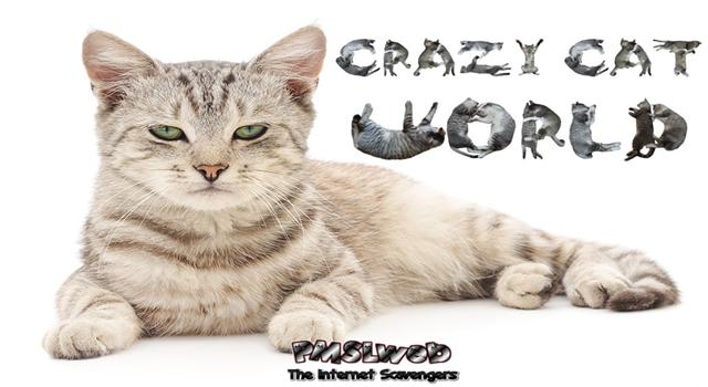 Crazy cat world PMSLweb