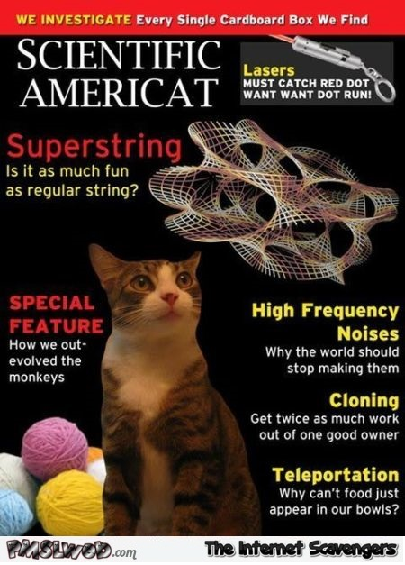Funny cat magazine – Crazy cat world @PMSLweb.com