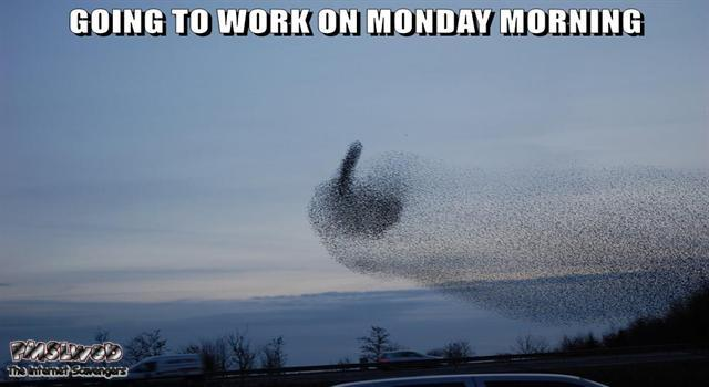 Funny Monday morning birds meme @PMSLweb.com