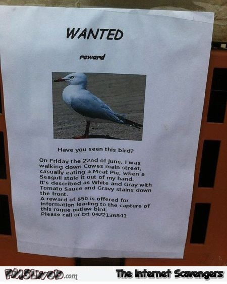 Funny wanted seagull poster @PMSLweb.com