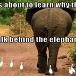 Why you should not walk behind the elephant meme @PMSLweb.com