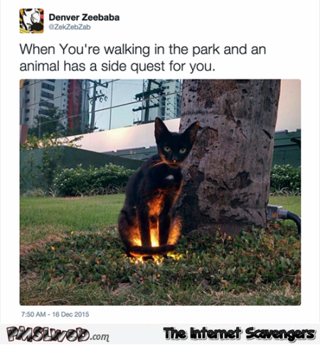 Funny when an animal has a side quest for you @PMSLweb.com
