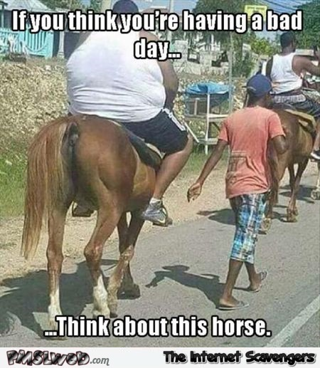 Funny Memes For A Bad Day : Horse humour page forums at psych central