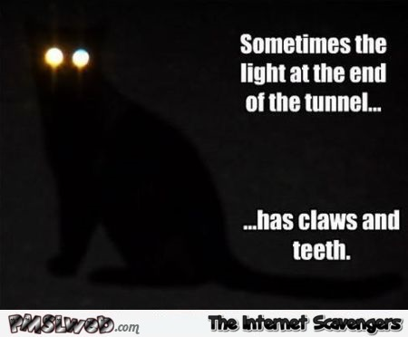 Light at the end of the tunnel cat humor @PMSLweb.com