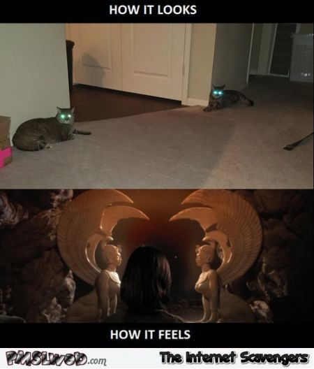 Cats how it looks versus how it feels humor @PMSLweb.com