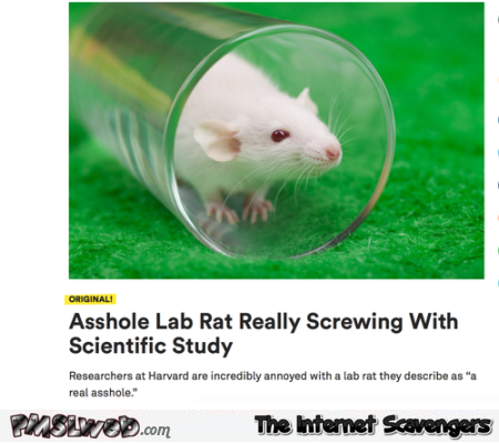 Funny asshole lab rat