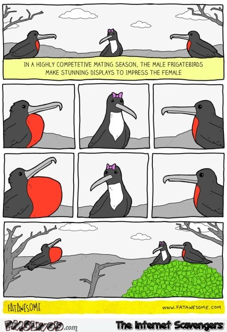 Frigate birds during mating season funny cartoon – Sunday humor @PMSLweb.com