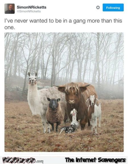 Funny I want to be in this gang @PMSLweb.com