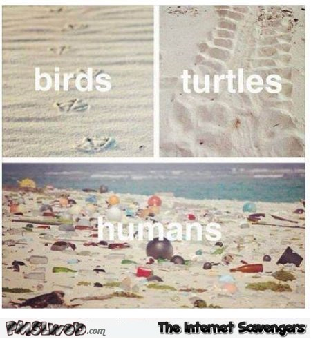 Birds turtles humans on the beach the sad truth @PMSLweb.com