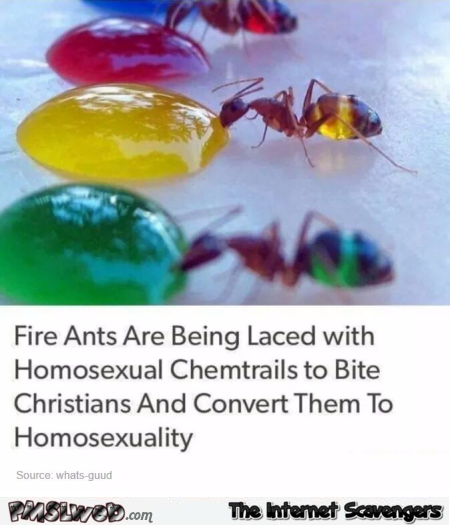 Converting ants to homosexuality humor @PMSLweb.com