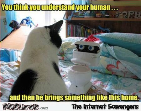 You think you understand your human cat meme @PMSLweb.com