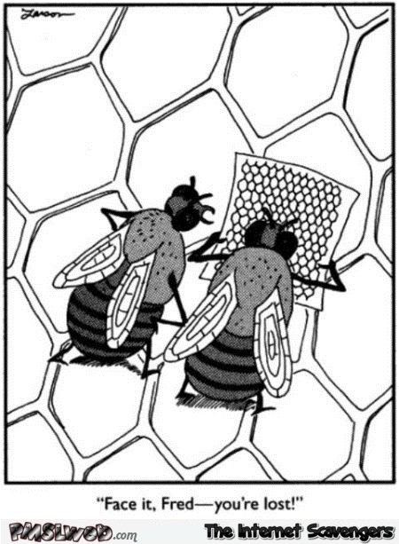 Bee is lost funny cartoon @PMSLweb.com