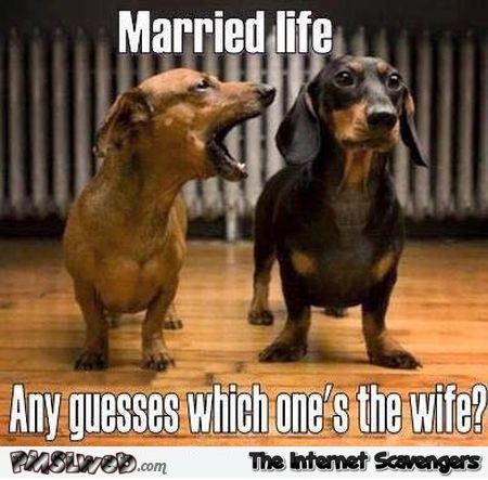 Guess which one's the wife funny meme @PMSLweb.com