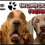 Hilarious dog pictures @PMSLweb.com