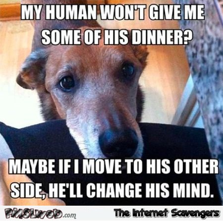 Funny dog begging logic meme