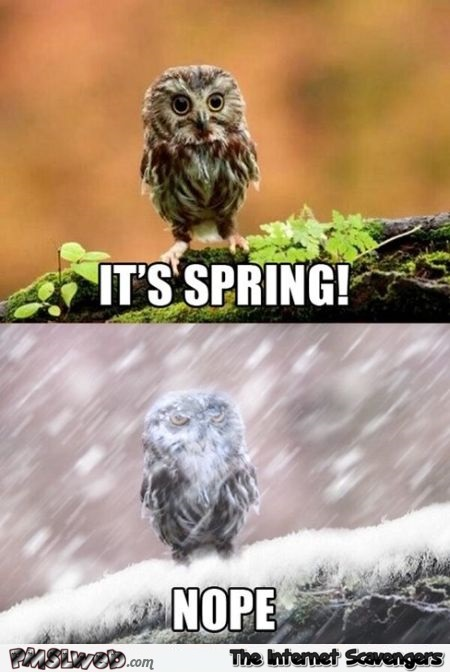 Spring is here meme @PMSLweb.com