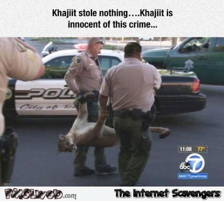 Khajiit stole nothing humor – Thursday LOL @PMSLweb.com