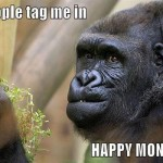 When people tag me in Happy Monday posts meme – Hilarious daily pictures @PMSLweb.com