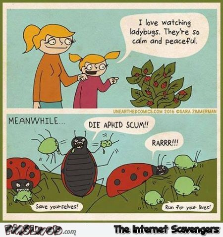 Funny ladybugs cartoon @PMSLweb.com