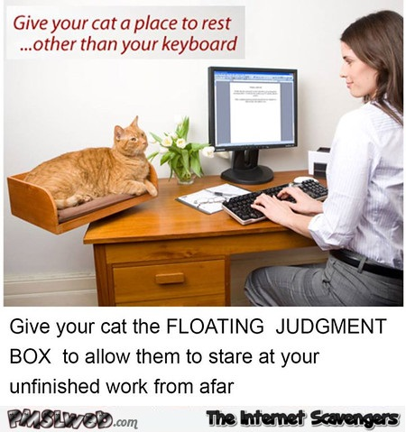 Funny cat floating judgment box