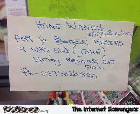 African American kittens need home humor @PMSLweb.com