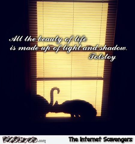 Tolstoy quote funny cat shadow @PMSLweb.com