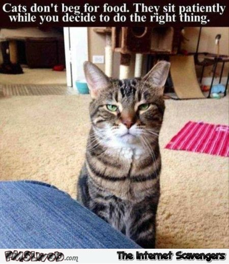 Cats don't beg for food humor @PMSLweb.com