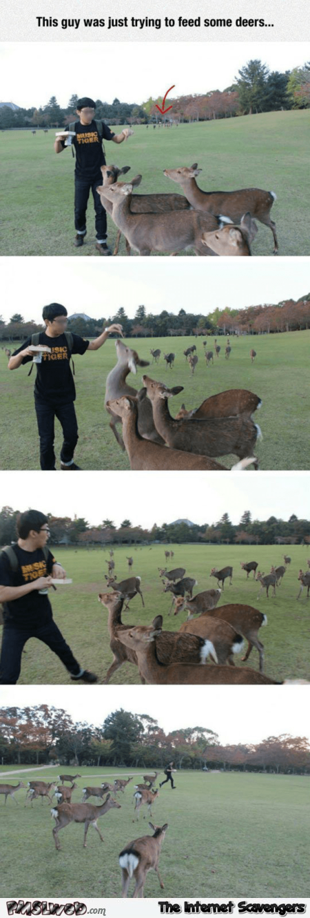 Be careful when trying to feed reindeers humor @PMSLweb.com