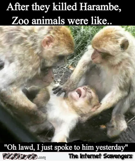 After they killed Harambe zoo animals were like humor @PMSLweb.com