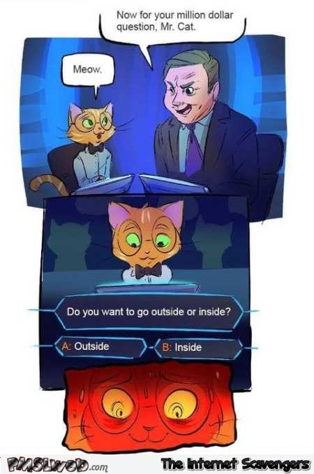 Funny cat on who wants to be a millionaire – Rib tickling Wednesday @PMSLweb.com