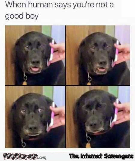When your human says you're not a good boy dog humor @PMSLweb.com