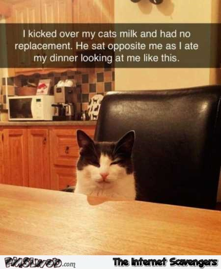 My cat is pissed at me humor @PMSLweb.com