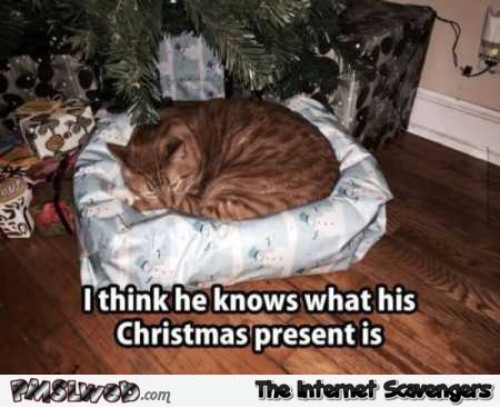 Cat knows what his Christmas present is meme @PMSLweb.com